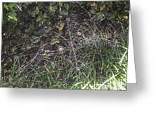 Spider Web Art. Greeting Card