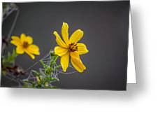 Spider Web On The Flower  Greeting Card
