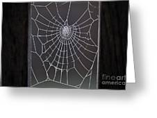 Spider Web With Frost Greeting Card