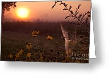 Spiderweb And Wildflowers Lit By Morning Sunrise Greeting Card