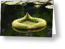 Spiky Lily Pad Greeting Card