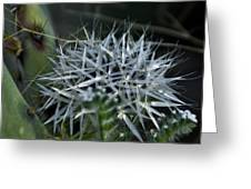 Spiney Bloom Greeting Card