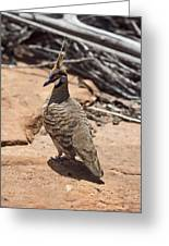 Spinifex Pigeon V3 Greeting Card
