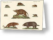 Spiny Animals Greeting Card