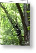 Spiny Orb Weaver Greeting Card