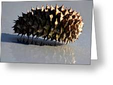 Spiny Reflections Greeting Card