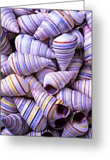 Spiral Sea Shells Greeting Card