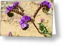 Spirals Of Lavender Greeting Card by Rebecca Christine Cardenas