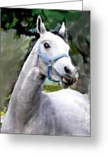 Spirited Grey Horse Greeting Card