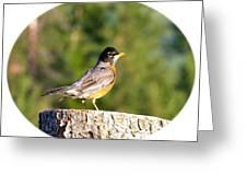 Spirited Robin Greeting Card