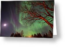 Spirits Of The Night    Greeting Card