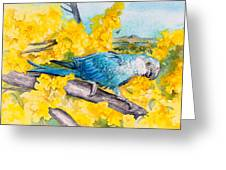 Spix's Macaw - A Dream Of Home Greeting Card