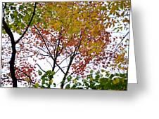 Splash Of Autumn Colors Greeting Card