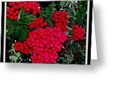 Splash Of Red Berries Greeting Card