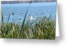 Splashing In The Lake Greeting Card