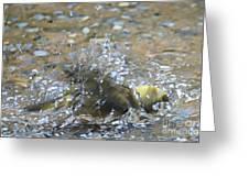 Splish Splash Bird Bath Greeting Card