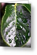 Split Leaf Greeting Card