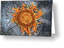Split Sunflower Greeting Card