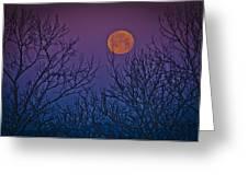 Spooky Beauty Greeting Card