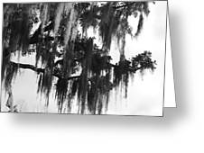 Spooky Trees Greeting Card