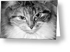 Spooleete. Cat Portrait In Black And White. Greeting Card