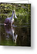 Spoonbill Having His Morning Meal Greeting Card