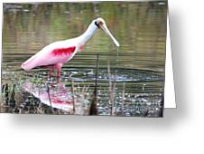 Spoonbill In The Pond Greeting Card