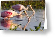 Spoonbill Reflections Greeting Card