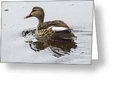 Spot-billed Duck  Greeting Card
