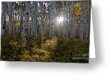 Spot Of Sun Greeting Card by Jeff Kolker