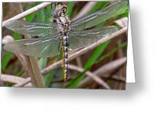 Spot Wing Glider Greeting Card