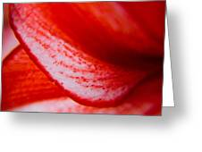 Spots Of A Lily Greeting Card by Kim Lagerhem