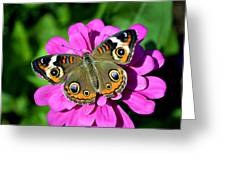 Spotted Butterfly On Pink Flower Greeting Card