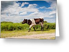 Calf Walking In Natural Landscape  Greeting Card