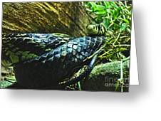 Spotted Coiled Snake Greeting Card