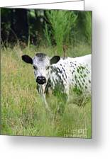 Spotted Cow In The Forest Greeting Card