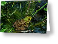 Spotted Frog Greeting Card