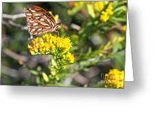 Spotted Gulf Fritillary Greeting Card