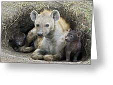 Spotted Hyena Mother And Pups Greeting Card