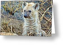 Spotted Hyena Pup In Kruger National Park-south Africa  Greeting Card