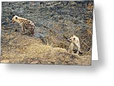 Spotted Hyena Pups In Kruger National Park-south Africa Greeting Card