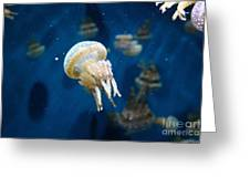 Spotted Jelly Fish 5d24950 Greeting Card by Wingsdomain Art and Photography