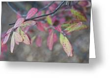 Spotted Leaves Greeting Card