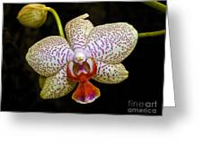 Spotted Orchid Greeting Card