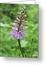Spotted-orchids Greeting Card