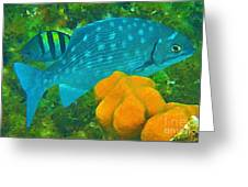 Spotted Surgeon Fish Greeting Card