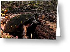 Spotted Turtle Greeting Card