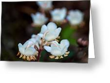 Spotted Wintergreen 4 Greeting Card