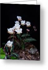 Spotted Wintergreen 5 Greeting Card