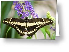 Spread Your Wings My Little Butterfly  Greeting Card
